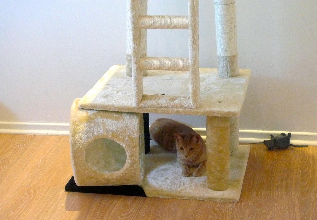 Hôtel pour chats