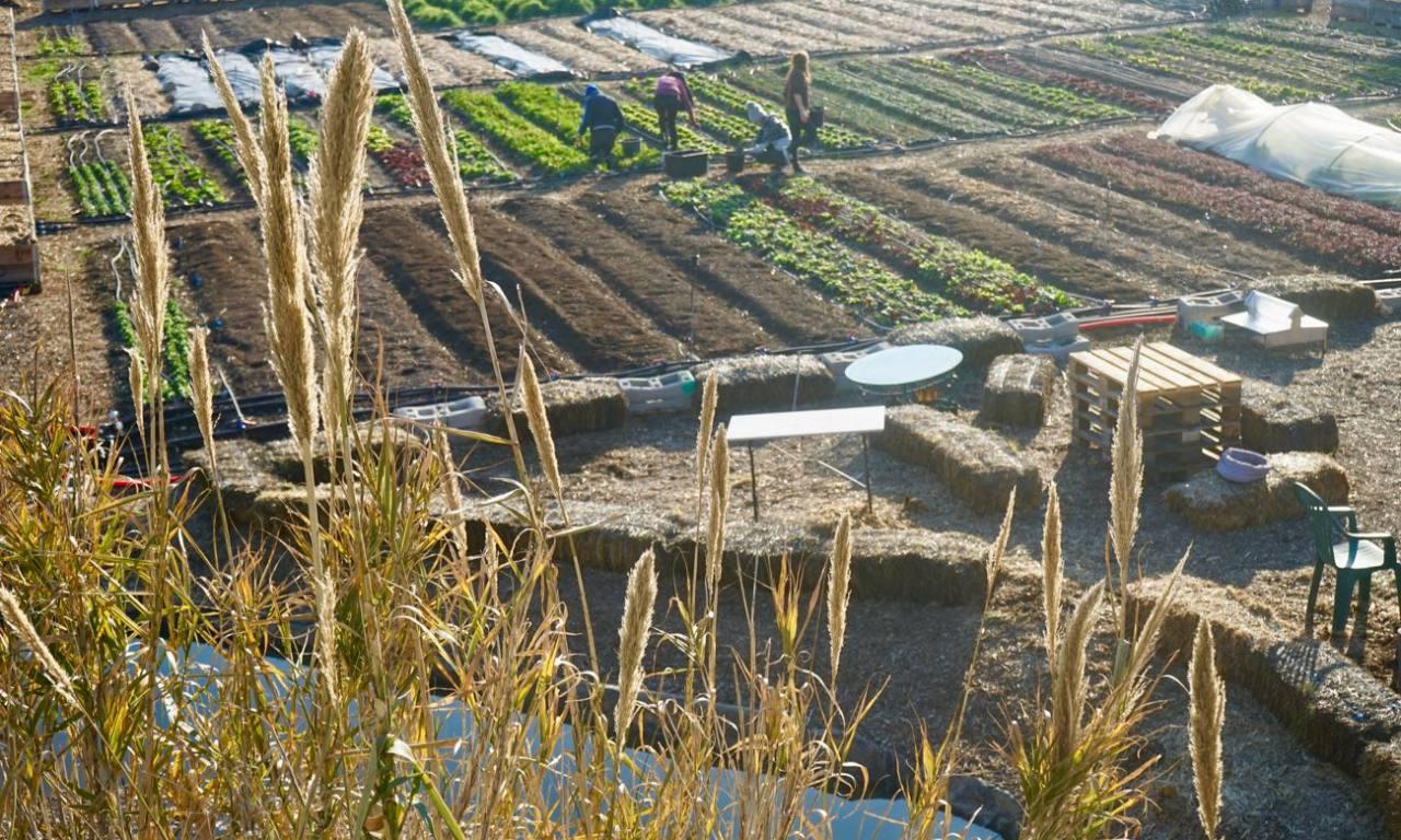 Agriculture urbaine Le Talus Marseille jardin