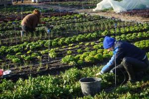 Agriculture urbaine Le Talus Marseille volontaires