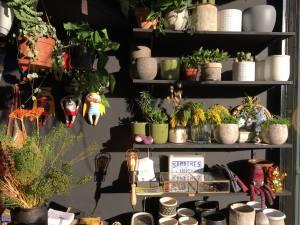 Jupiters boutique de plantes et objets à Marseille vases