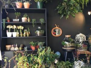 Jupiters boutique de plantes et objets à Marseille plantes