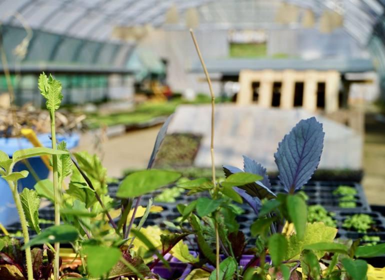 Le Paysan Urbain culture de micro-pousses à Marseille plantes