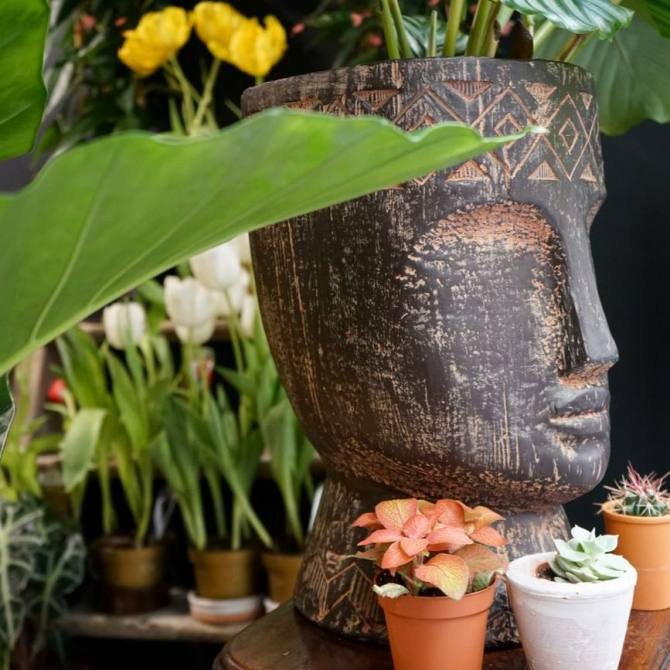 Sapiens, décoration florale et objets à Marseille (plantes)