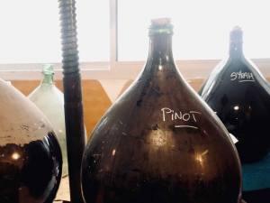Pour, la cave à vins naturels s de Nathalie Cornec (cépages)