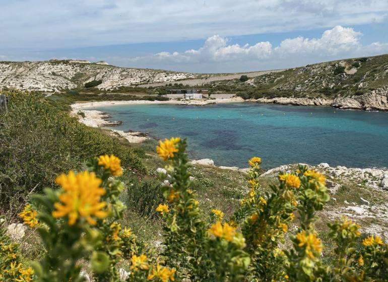 Archipel du Frioul, les îles au large de Marseille (plages)