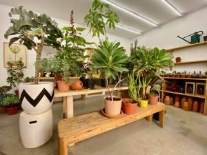 Akou, flower shop (Plants, seeds, soils, pots, tools) in Marseille (plants)