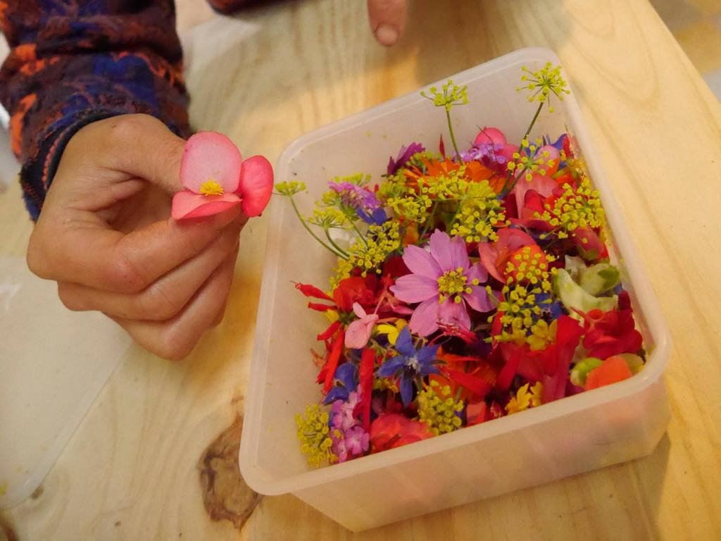 Bigoud, fleurs comestibles à Marseille et fleurs décoratives, en bouquet ou à manger (Assortiment de fleurs fraiches à manger)