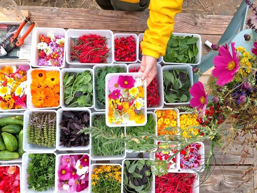 Bigoud, fleurs comestibles à Marseille et fleurs décoratives, en bouquet ou à manger (assortiment de fleurs comestibles)