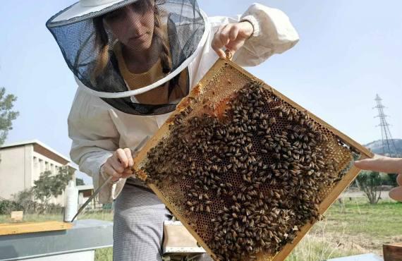Jamie Lozoff, apicultrice à Marseille (cadre de ruche avec abeilles)