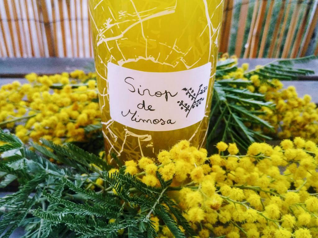 La draille comestible, balades à Marseille pour découvrir les plantes sauvages : recette de sirop de mimosa
