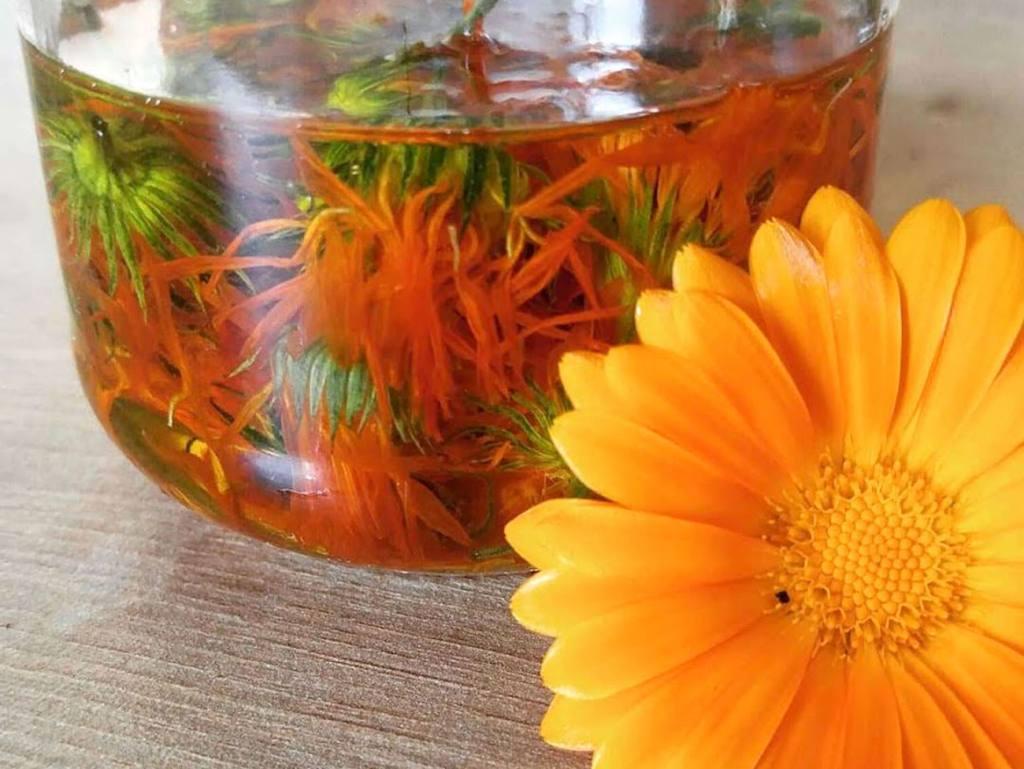 La draille comestible, balades à Marseille pour découvrir les plantes sauvages : calendula