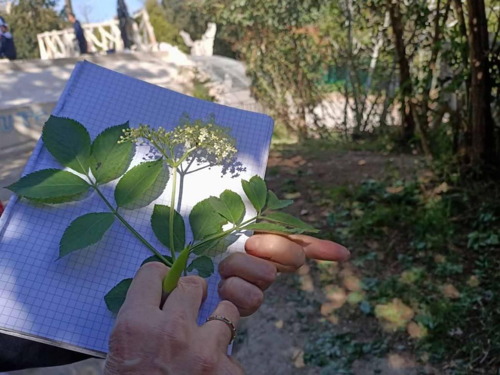 La draille comestible, balades à Marseille pour découvrir les plantes sauvages : cahier
