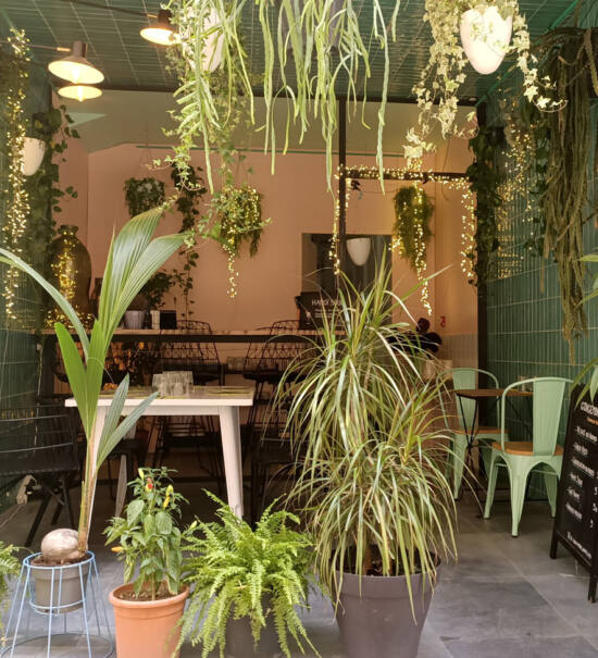 Gingembre, Vietnamese restaurant in Marseille : terrace and plant